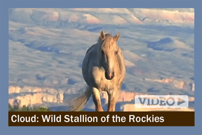 """Ginger Kathrens has beeni filing the Pryor Mountain horses since 1995, producing a series of three documentaries for PBS """"Nature."""" The latest installment, """"Cloud: Challenge of the Stallions,"""" premiers on October 25, 2009."""