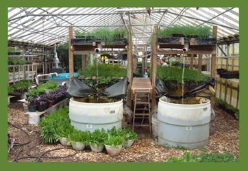 The Growing Power greenhouse - intensive all-season farming generates between $5 and $30 per square foot   (photo: Growing Power)